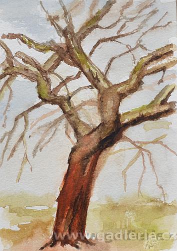 STARÁ JABLOŇ, akvarelová skica