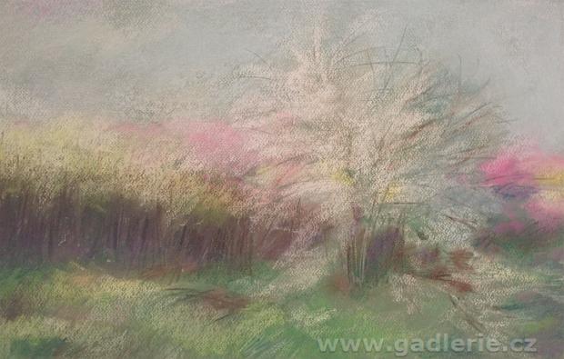 TRNKY, suchý pastel, karton, 50 x 35 cm